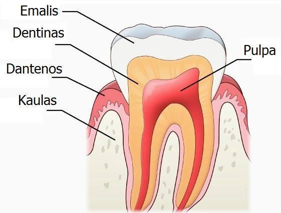 Endodontologija (dantų šaknų kanalų gydymas)